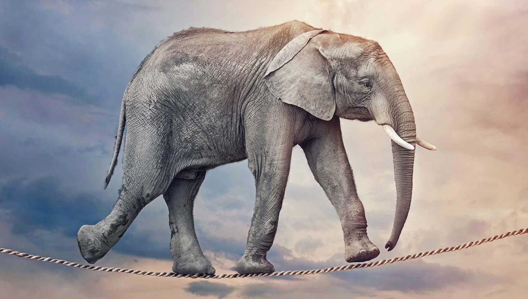 elefant_seiltanz