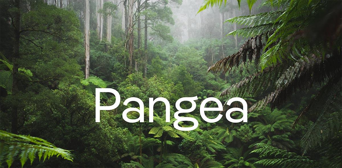 Pangea-Schriftzug, weiß im grünen Regenwald